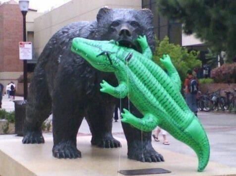 Photo: UCLA Campus Statue Takes Bite Out Of Blow-up Gator